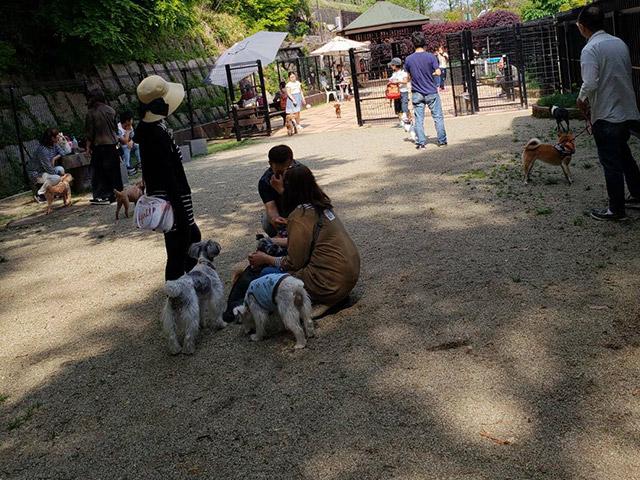 ドッグラン こもれびの広場2